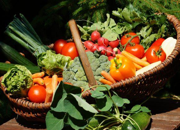 Zdravlje kroz ekološki uzgoj