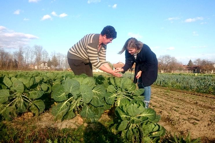 Konvencionalni uzgoj OPG Šipek zamijenio je ekološkim